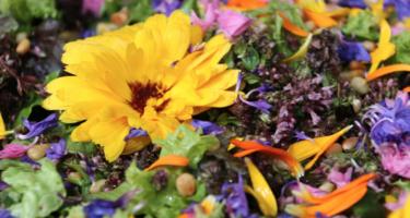 Blomster-- retreat på Samsø med Lisbeth Fruensgaard og Anette Meldgaard