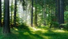 Hvis du ikke allerede gør det, er der rigtig god grund til at begynde at opholde dig mere i naturen. Læs her hvorfor. Af stresscoach og forfatter Lisbeth Fruensgaard